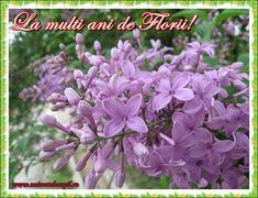felicitari-de-florii.jpg (686×526)