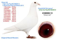 6180000-13 • Marcel Wouters