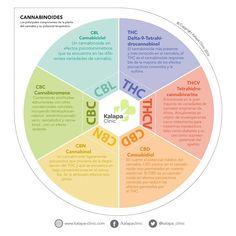 Cannabinoides Terapéuticos, Cannabidiol, Tetrahidrocanabinol, Cannabinol, Cannabicromene, Cannabiciclol, Tetrahidrocannabivarina Cannabis, Medical Miracles, Cbd Hemp Oil, Oil Benefits, Biology, Clinic, Weed, Health, Wellness