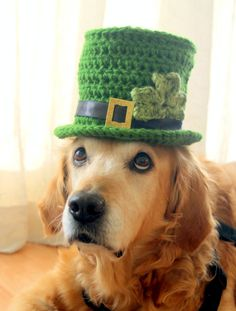 5 St. Patrick's Day Accessories for your dog!