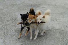 3 honden, 1 stok