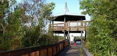 Sawgrass Park. A great place to see Florida wildlife: gators, armadillos, peacocks and more!