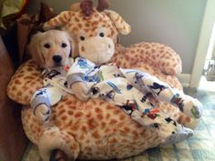doggies in pyjamas are too cute! Puppies In Pajamas, Baby Puppies, Dogs And Puppies, Doggies, Baby Dogs, Pyjamas, Baby Animals, Cute Animals, Funny Animals