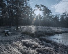 Bankje in de zwakke winterzon bij het Turfven in het Mastbos // Winter