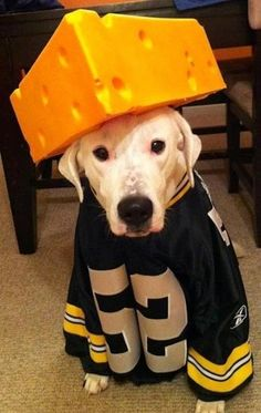 30 Dogs Who Are Ready For The Super Bowl
