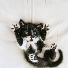 Photo And Video, Cats, Instagram Posts, Animals, Jasmine, Texas, Image, Photos, El Paso