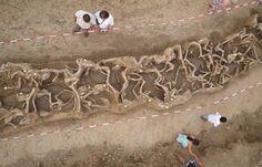 In 2010 werd bij de Oostelijke Rug tussen de Spekstraat en de Pasestraat tijdens graafwerkzaamheden in het kader van het Grensmaasproject een uniek massagraf met resten van 69 paarden ontdekt. Niet eerder vond men in West-Europa zoveel paarden in een graf. het Beleg van Maastricht door de Franse generaal Kléber in 1794 als meest waarschijnlijke mogelijkheid gegeven.