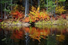 "Check out my art piece ""Colors Of Fall"" on crated.com #art #photography #fall #autumn"