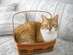 get out of there cat. you don't even respect that this basket is collectible and purely decorative.