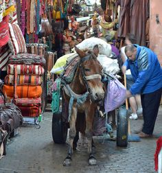 Morocco http://www.whenevermarrakech.com/what-to-do/ http://www.marrakechrougehostels.com/welcome/ http://www.thistimeinmarrakech.com/what-to-visit/