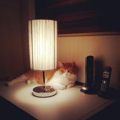 Desk lamp. By emvullu