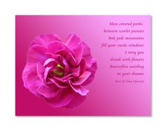 1000 Images About Flower Photography With Poems And Quotes On Pinterest