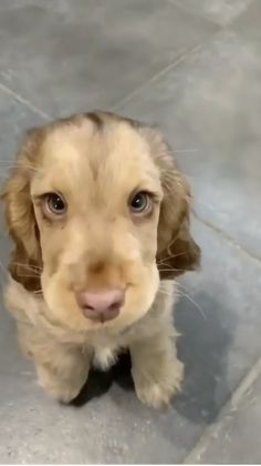 Super Cute Puppies, Cute Baby Dogs, Cute Funny Dogs, Cute Dogs And Puppies, Cute Funny Animals, Puppies Puppies, Retriever Puppies, Cute Puppy Pics, Cute Pets