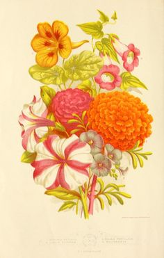 1881 - Vick's floral guide, - Biodiversity Heritage Library