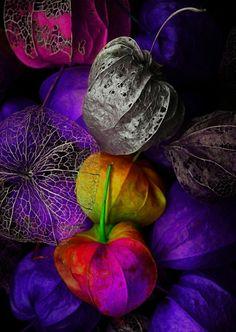 dark purple margic