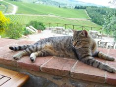 Our friend in Tuscany