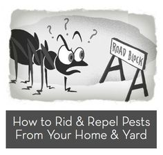 How to: Deal with Summertime Bugs and Pests » Curbly | DIY Design Community