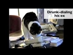 Great Video!!  LOL...Funny....How Single Cats Are Spending Valentine's Day.