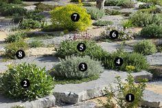1 : Ruta graveolens 2 : Lomelosia minoana 3 : Teucrium cossonii 4 : Rosmarinus officinalis 'Montagnette' 5 : Stachys byzantina 6 : Erodium trifolium 7 : Euphorbia 'Copton Ash'