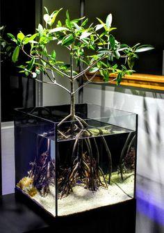 45 Stunning Aquarium Design Ideas for Indoor Decorations - Page 16 of 45 - SooPush - aquascaping Planted Aquarium, Aquarium Aquascape, Aquascaping, Aquarium Terrarium, Home Aquarium, Terrarium Plants, Reef Aquarium, Aquarium Fish Tank, Terrarium Tank