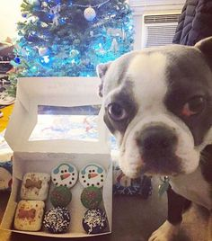 Bakery for dogs carrying fresh baked treats, food, toys, clothes & more! Tag us at @thedogbakery_ and #thedogbakery