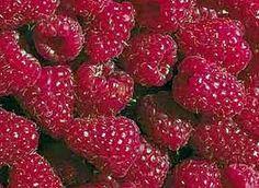 frutas silvestres  frambuesas