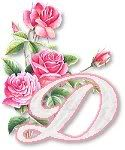Pink Roses  D