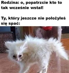 Polish Memes, Funny Mems, Wtf Funny, Funny Images, Jokes, Positivity, Lol, Cats, Smile