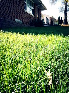 Organic lawn care is CHEAP lawn care - Hipster Housewife