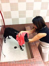 Self-Service Pet Wash at Pet Food Express (Incl. Grooming Salon, Pet Grooming, Dog Dental Care, Dog Care, Dog Bath Tub, Dog Washing Station, Dog Shots, Pet Spa, Pet Clinic