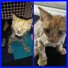 Chester's Story http://www.wearvalley.cats.org.uk/wearvalley/news/chesterwvdar
