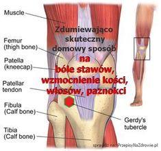 Zdumiewająco prosty sposób na bóle stawów, wzmocnienie kości, włosów, paznokci. Sprawdziłam - działa. Faktycznie trudno uwierzyć, że wystarczy jeden Anti Inflammatory Diet, Knee Pain, Arthritis, Dna, Natural Remedies, Education, Health, Blog, Women