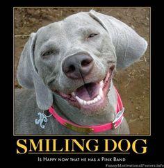 love a happy dog.