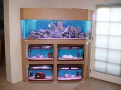 diy aquarium furniture stands are an integral part of every aquatic system. The aquarium stand should be sturdy so that it can bear the weight of a filled a. 75 Gallon Aquarium Stand, All Glass Aquarium, Wall Aquarium, Nature Aquarium, Saltwater Tank, Saltwater Aquarium, Freshwater Aquarium, Tropical Aquarium, Unique Fish Tanks