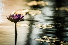 Lotus by Dmitri Yakovlev on 500px