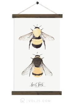 Insect Study Bumble Bee   Botanic Collection   more options