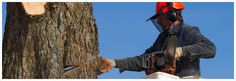 If you are looking for the Tree Cutting Services then  All tree & Stump Removal is the best place to get High-quality Tree Pruning Services in Adelaide. To arrange Tree Trimming and Pruning for your home, call our team today on0439 686 959