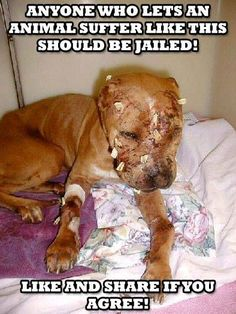 """Anyone who lets an animal suffer like this should feel that exact suffering as the animal does......""""AN EYE FOR AN EYE""""!!!!!"""
