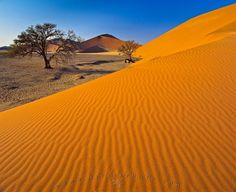 Free Computer Background (Wallpaper): A classic nature picture of trees beside colorful sand dunes at Sossusvlei, located inside Namib Naukluft National Park in Namibia, Africa. Landscape Pictures, Nature Pictures, Cool Pictures, Picture Tree, Desert Dream, Beautiful Sites, Beautiful Places, Africa Travel, Beach Photos