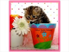 Small kitten  growing in the pot. 25 adorable kitten growing in the pot