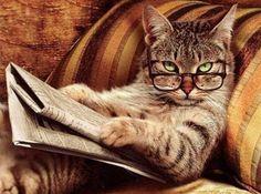 22 curiosidades sobre los gatos: 1. Las personas que tienen gatos viven más, tienen menos estrés ...