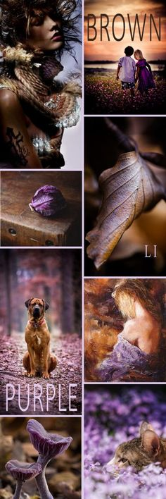 Lu's Inspiration ღ purple and brown