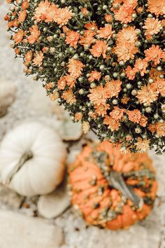 fall decor, home decor, affordable decor, rustic decor, farmhouse decor, farmhouse inspo, decorating for fall, fall 2020, interior design, interior decorating, coffee table inspo, fire pit decor, home DIY, #homedecor, decor on a budget, affordable decor, rustic farmhouse vibes, homes we love, better homes and gardens, country living magazine, pumpkin decor, candle decor, building a fire pit in the woods - Deb and Danelle Modern Fall Decor, Fall Home Decor, Autumn Home, Fire Pit Decor, Wood Fire Pit, Rustic Farmhouse Decor, Rustic Decor, Decoration Christmas, Country Living Magazine