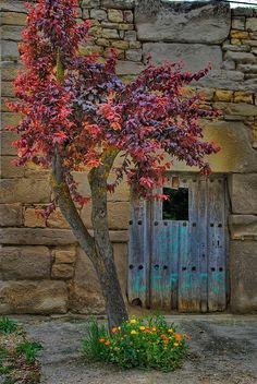 Turquoise door in old stone building. Love the contrast of the vibrant fall leaves...