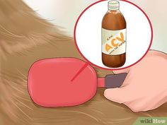 How to Use Apple Cider Vinegar for Dogs. People have used vinegar for centuries as a health treatment and household cleaning agent. Fans of apple cider vinegar (ACV) claim it is a natural preservative, disinfectant, source of nutrients,. Dog Shedding Remedies, Dog Flea Remedies, Home Remedies For Fleas, Dog Care Tips, Pet Care, Apple Cider Vinegar Dogs, Apple Cider Viniger, Homemade Flea Spray, Medication For Dogs