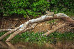 """A educação é o único meio capaz de fazer as pessoas se conscientizarem em relação à preservação do planeta. """"Brasil Selvagem"""", de Cristian Dimitrius."""