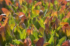 Summer veg seedlings at Fentongollan Farm