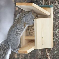 Jack in the Box Squirrel Feeder by DuncraftForTheBirds on Etsy