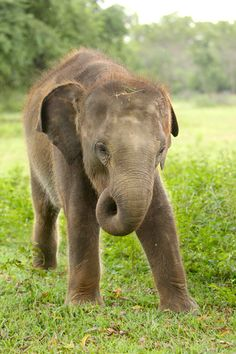 Meet the Elephants of ETH | conservation Elephants, Conservation, Meet, Animals, Animaux, Elephant, Animal, Animales, Canning