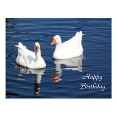 White Geese 9598 Birthday Postcard - birthday gifts party celebration custom gift ideas diy